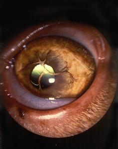PPM - iris-to-iris